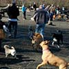 image of dogs off leash